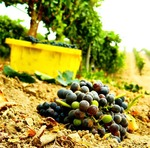 grapes 3 2